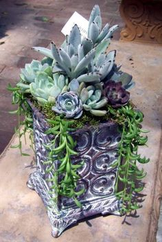 Mix the textures of succulents with a textured pot for an interesting display. via About.com