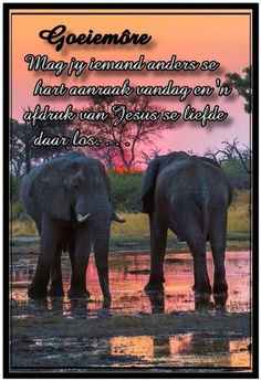 Afrikaanse Quotes, Goeie More, Good Morning Wishes, Good Night, Christianity, Elephant, Bible, Messages, Animals