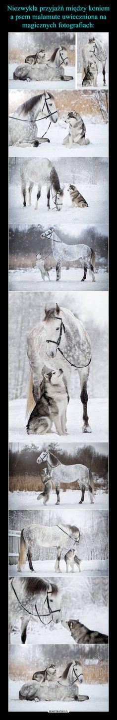Niezwykła przyjaźń między koniem a psem malamute uwieczniona na magicznych fotografiach: