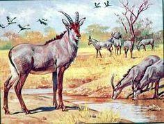 Bluebuck status: extinct