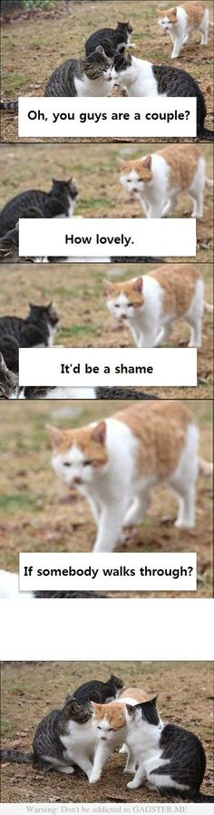 """this cat is like the animal embodiment of me sometimes. its one of those """"get a room!"""" moments"""