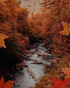 Autumn Cozy, Autumn Fall, Autumn Inspiration, Trick Or Treat, Autumn Leaves, Winter, Christmas, Outdoor, Instagram