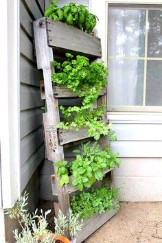 DIY Paletten Kräutergarten Ideen für Heute - Palette Vertikaler Kräutergarten There are hardly any amateur gardeners and garden owners who have not thought about creating a herb garden to benefit from their own and fresh herbs year after year. Vertical Pallet Garden, Herb Garden Pallet, Diy Herb Garden, Garden Ideas, Vertical Gardens, Herbs Garden, Easy Garden, Vertical Planter, Vertical Bar