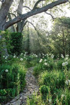 Amazing Stone path and wild