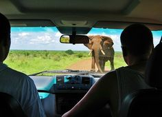 Kruger National Park South Africa - elephant standoff
