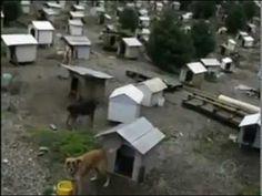 """Família cuida de cães abandonados e cria """"favela"""" de cachorros na serra gaúcha - YouTube"""