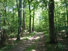 Image result for north american coniferous forests