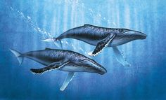 humpback whale painting - Google Search