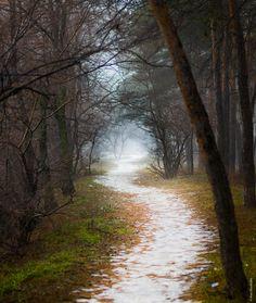 "magicalnaturetour: ""Newyear trail by Alex Gladkikh """