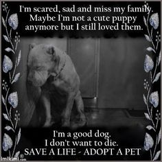Adoption is not a short-term hobby. It's a lifelong commitment. Innocent dogs like this don't understand why their owner/family dumped them at a kill shelter. There may be lots of reasons, but in the end, the dog pays the price with his or her own life. Before you go to a breeder or retail pet store, visit a local shelter. Adopt a quality pet and save a life!