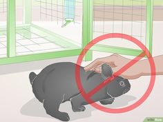 rabbit hutch indoor The 3 Best Ways to Earn Your Rabbits Trust - wikiHow Rabbit Toys, Pet Rabbit, Rabbit Pen, Chinchilla, Rabbit Hutch Indoor, Indoor Rabbit Cages, Indoor Rabbit House, Diy Bunny Toys, Pet Bunny Rabbits