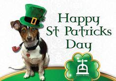 Happy St Patrick's Day! Happy St Patricks Day, Charity, Saints, Dogs, Artwork, Work Of Art, Doggies, Pet Dogs, Dog