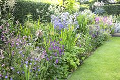 tl_files/garden-and-flowers/blog-images/MOH-7812 border juli 3.jpg