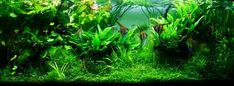 The Jungle Style Aquarium - Aquascaping Love