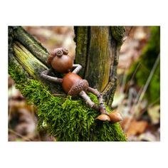 Acorn elf resting on the branch postcard - Christmas crafts - Acorn Crafts, Pine Cone Crafts, Wood Crafts, Crafts With Acorns, Nature Crafts, Fall Crafts, Summer Crafts, Christmas Crafts, Garden Crafts