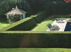 Privet Fencing- We love Privet as a privacy barrier! Grows well and its fairly easy to maintain.