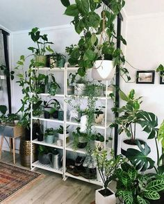 40+ Enchanting Small Gardens Inside The House