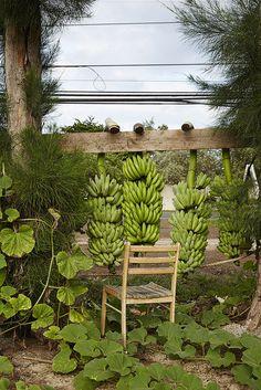 bananas, Hawaii