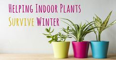 indoor benefits Keep your indoor plants alive this winter & enjoy the benefits of fresh air. # Keep your indoor plants alive this winter & enjoy the benefits of fresh air. Air Conditioning Services, Heating And Air Conditioning, Best Paint Colors, Paint Shades, Protecting Your Home, Heating And Cooling, Indoor Plants, Planter Pots, Home Improvement