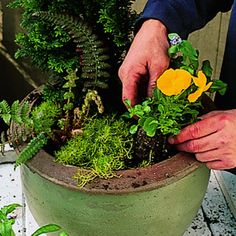 Video: How to plant a container - Cool Container Gardens - Sunset