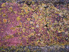 Lichen on brick at Fort Pulaski near Tybee Island, GA. #nature