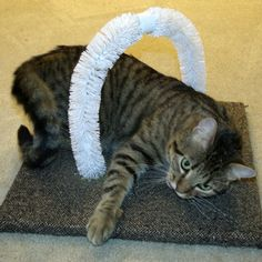 Self Petting Station for your cat using toilet bowl brushes!