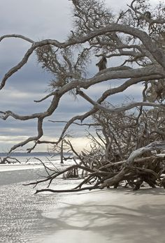 Ossabaw Island Tangled Shadows An Original Photograph By Melissa Schneider