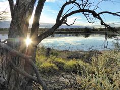 So close to Berri, South Australia (just over the bridge), yet seeming like a world away, the sun sets over the water, as the bird life enjoys the teeming food supply in the creeks and lagoons.