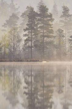 The Kingdom of the Great Pines, Lake Spasskoe, Yaroslavl Oblast, Russia / Deinge L via Moon & Trees