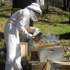Home beekeeping... anyone can do it! Frühingskabine Micro-Farm @ www.fmicrofarm.com
