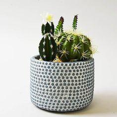 Artificial Cactus Green in Textured Pot 19cm | Dunelm Faux Plants, Potted Plants, White Pot, Blue And White, Artificial Cactus, Industrial Bedroom, Rose Cottage, Planter Pots, Succulents