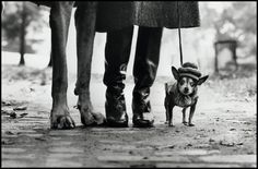 Elliott Erwitt. USA. New York. 1974. Great framing and perspective to show the size difference between the small and large dogs. The dog on the left with its long legs looks almost like another set of human legs. The small dog looks child like with its hat and coat.