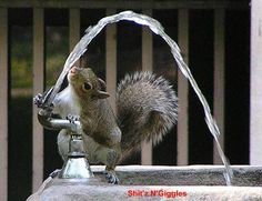 Smart squirrel!