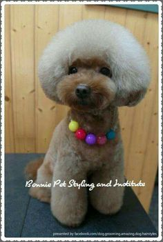 Amazing dog hairstyles