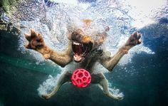 Fotos magníficas de cães mergulhando