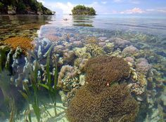 Coral Triangle Kepulauan Togean-Indonesia