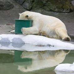 hungover-animals16