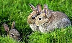 wild baby rabbits images - Google Search