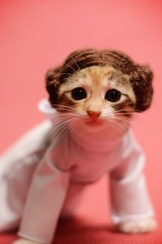 Help me kitty Leia, you're my only hope! adorbs beyond words