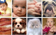 Replace Baby Pics in Your #Facebook Feed With Bacon and Cats