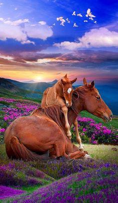 Pretty Horses, Horse Love, Beautiful Horses, Animals Beautiful, Animals And Pets, Baby Animals, Cute Animals, Cavalo Wallpaper, Cute Hug