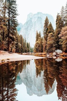 The 33 Most Beautiful Places In America Before You Die + Budget Travel Portofolio Fotografi Pemandangan Alam – Yosemite-Nationalpark Jolie Photo, Adventure Is Out There, Beautiful Landscapes, Trees Beautiful, Beautiful Gorgeous, The Great Outdoors, Wonders Of The World, Travel Photography, Adventure Photography