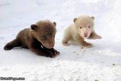Bildergebnis für baby bear cute