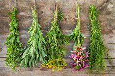 Výsledok vyhľadávania obrázkov pre dopyt krajina s bylinkami