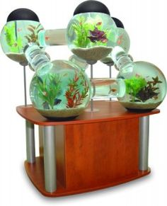 Allow me to explain why this aquarium is a horrible idea: 1. Bettas fight and have to be kept separate. 2. Bettas are a special kind of fish that occasionally needs to gulp air from the surface. 3. What if fish got stuck? 4. It reduces the amount of space and water your fish has to swim in. ...Make sure that your pet products are good FOR YOUR PETS, not just aesthetically pleasing to you!