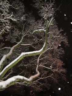Magic Tree by Rosita Larsson