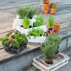 Pintratuin on pinterest met door de and tuin for Planten schilderij intratuin
