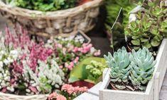 Ecco le 7 piante perenni da balcone, facilissime da curare, per avere uno spazio verde rigoglioso e fiorito tutto l'anno: scoprite quali sono!