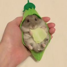 The cutest hamster ever. http://ift.tt/2vI2ydm