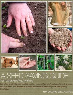 Free to download, the Organic Seed Alliance seed-saving guide is loaded with how-to tips and the science behind it all. Love this guide, and the OSA!